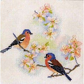Chaffinches & Blossom BB02